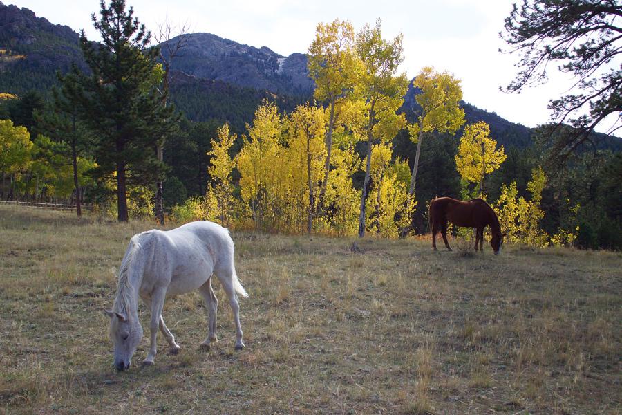 delta, colorado, horses, fall colors